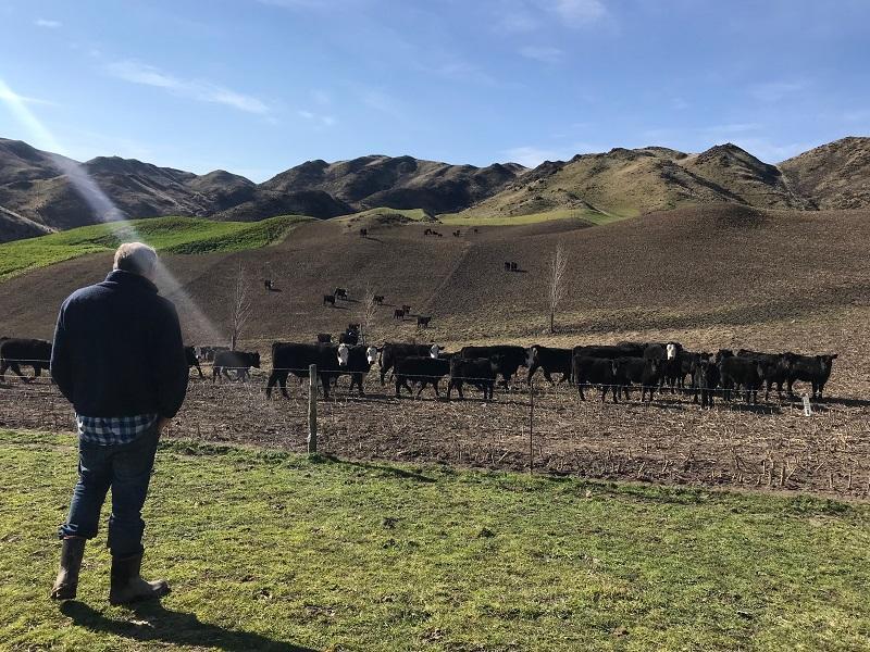 肉牛400頭と羊5,000頭を2,800haの面積で所有