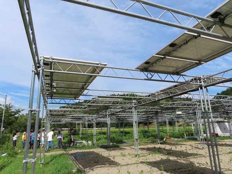 写真12:ソーラーシェアリング