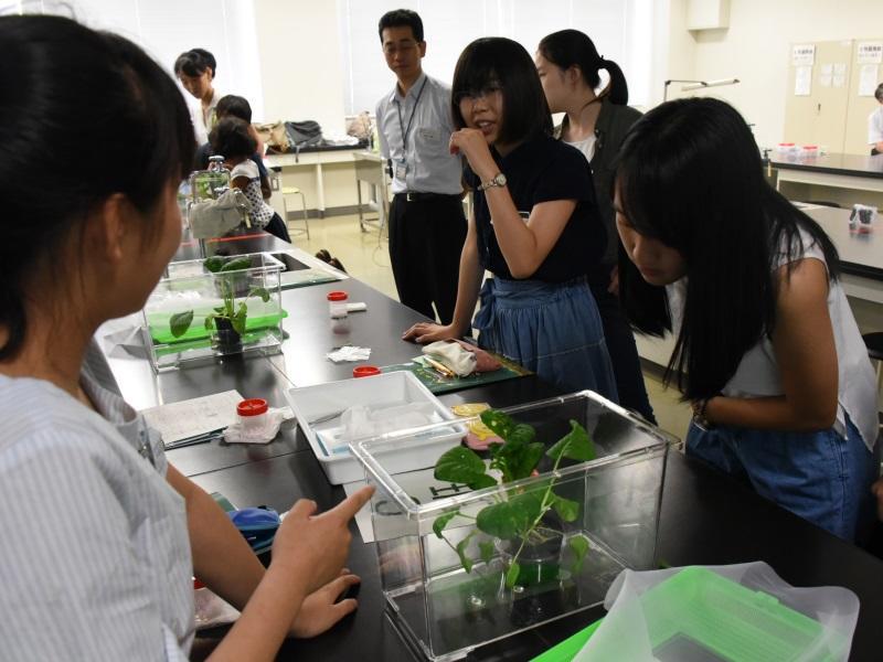 植物のかおりの実験をする参加者たち