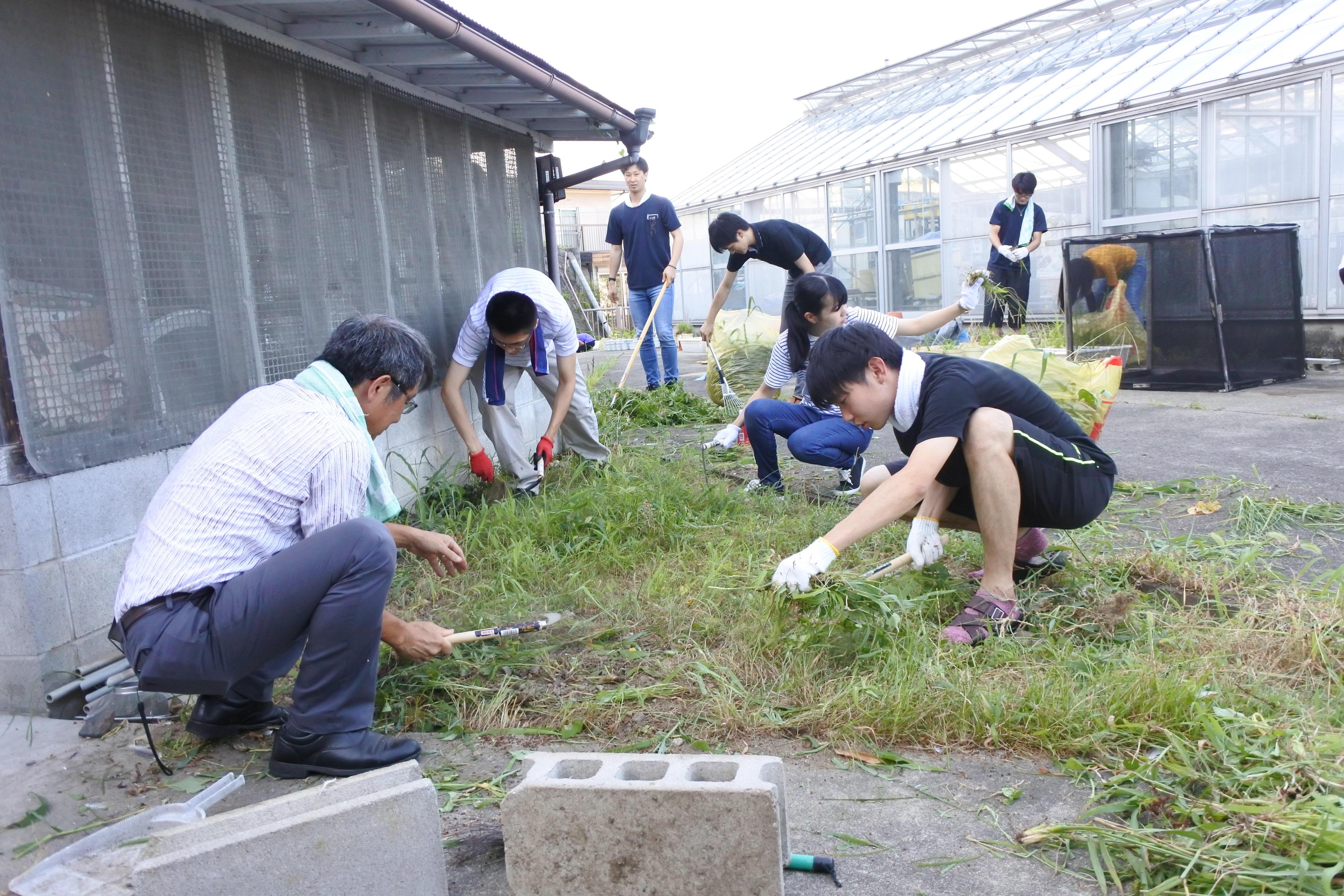 熱心に草を刈る学生と教授