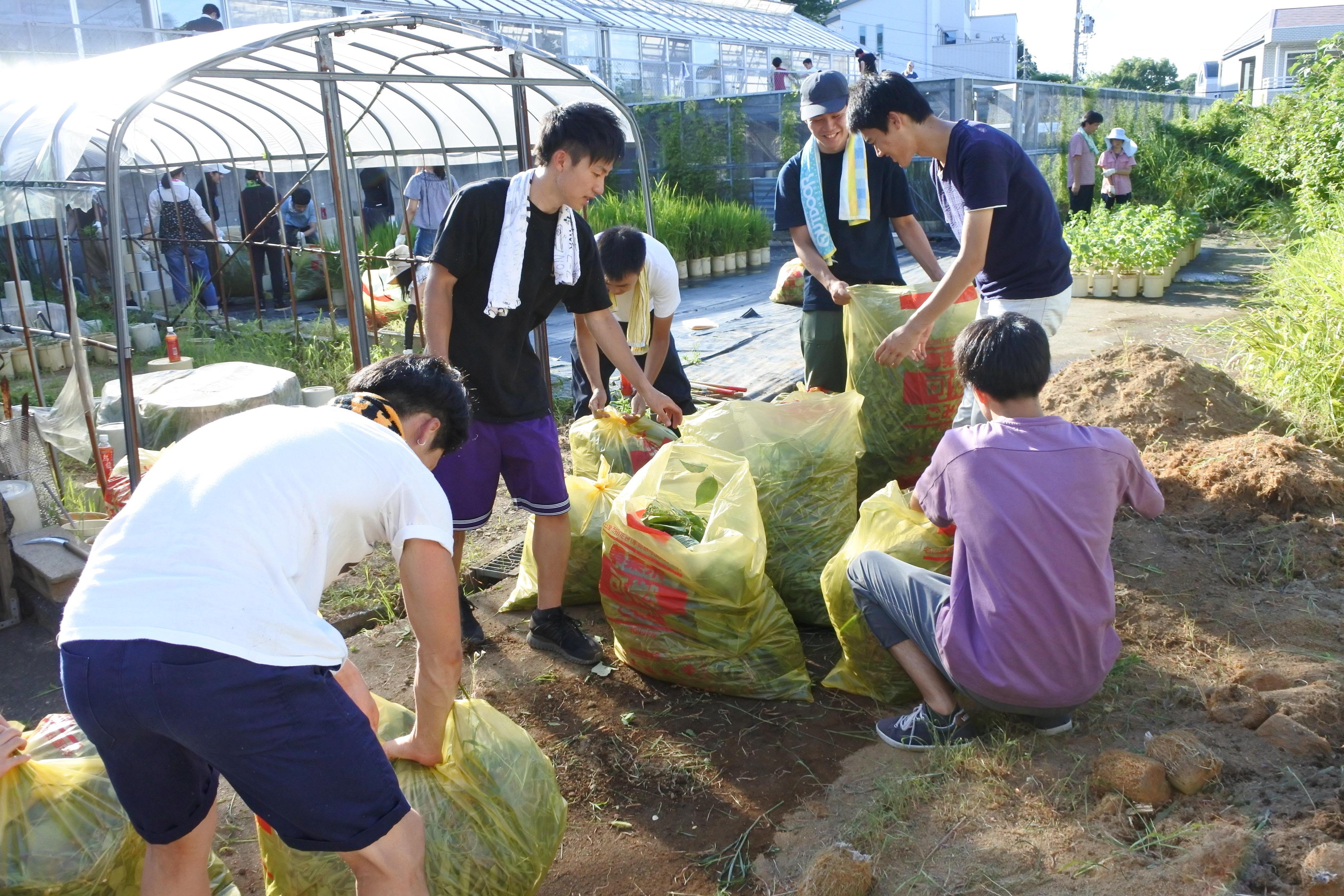 刈った草をごみ袋に詰める学生たち