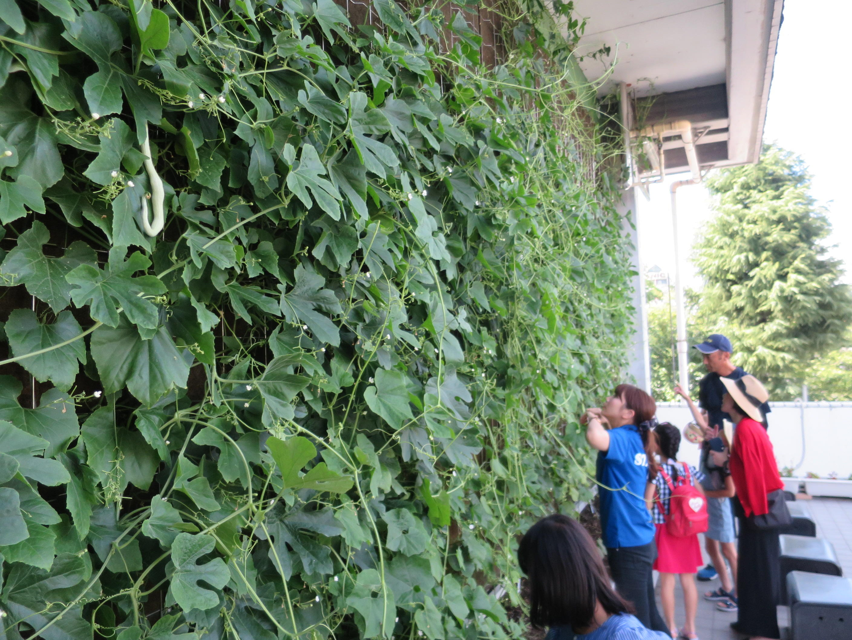 名古屋市下水道科学館の外壁にできたセイロン瓜のグリーンカーテン