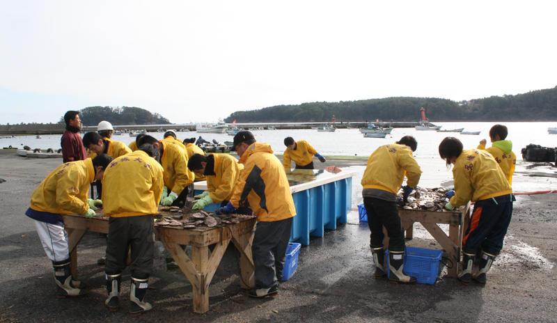 大島のボランティア活動では初体験となった養殖ホタテ貝の手入れ作業。 冷たい海風を受けての作業でしたが時間とともに熱も入りました。