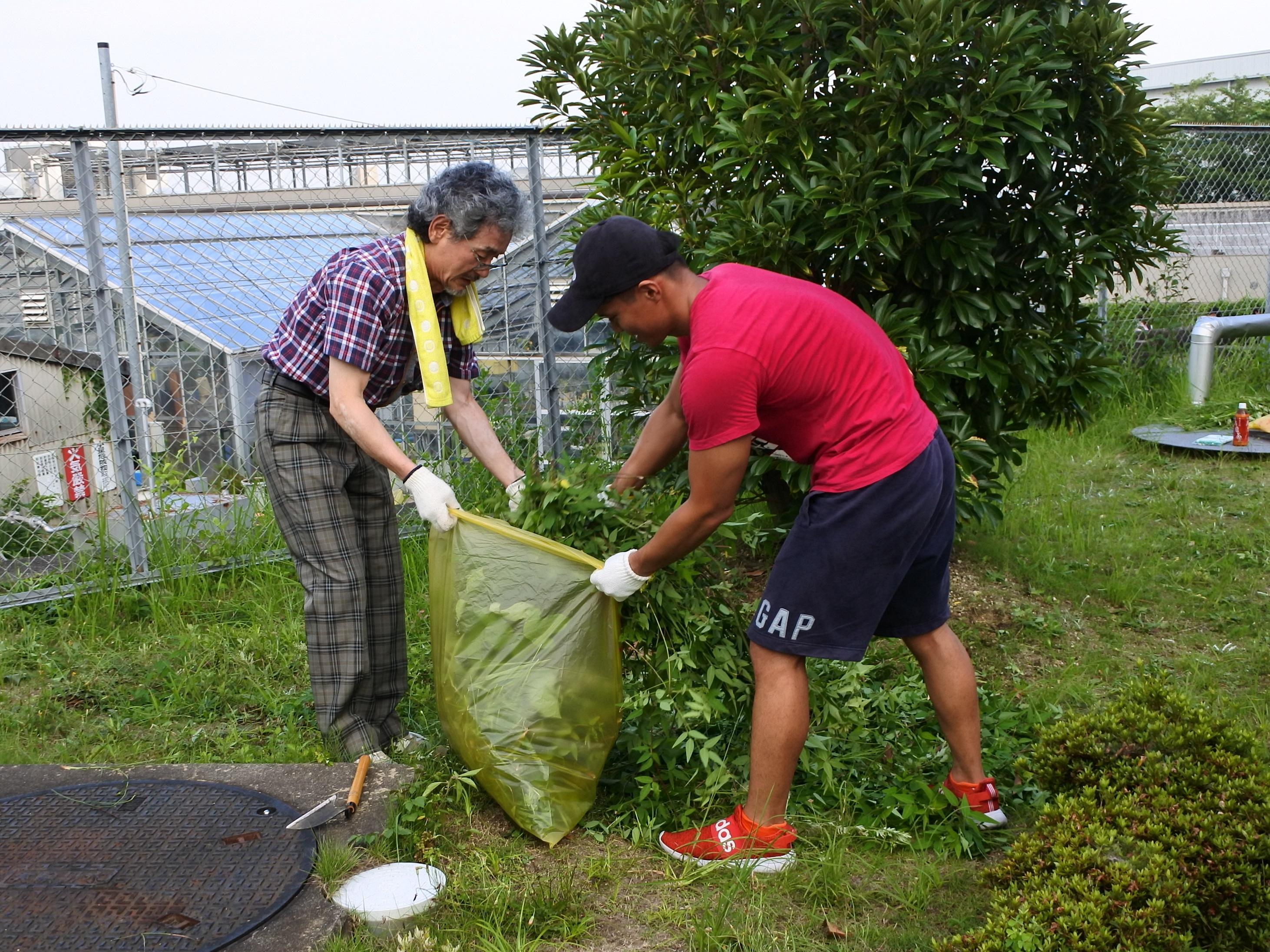 刈り取った草を袋に詰める