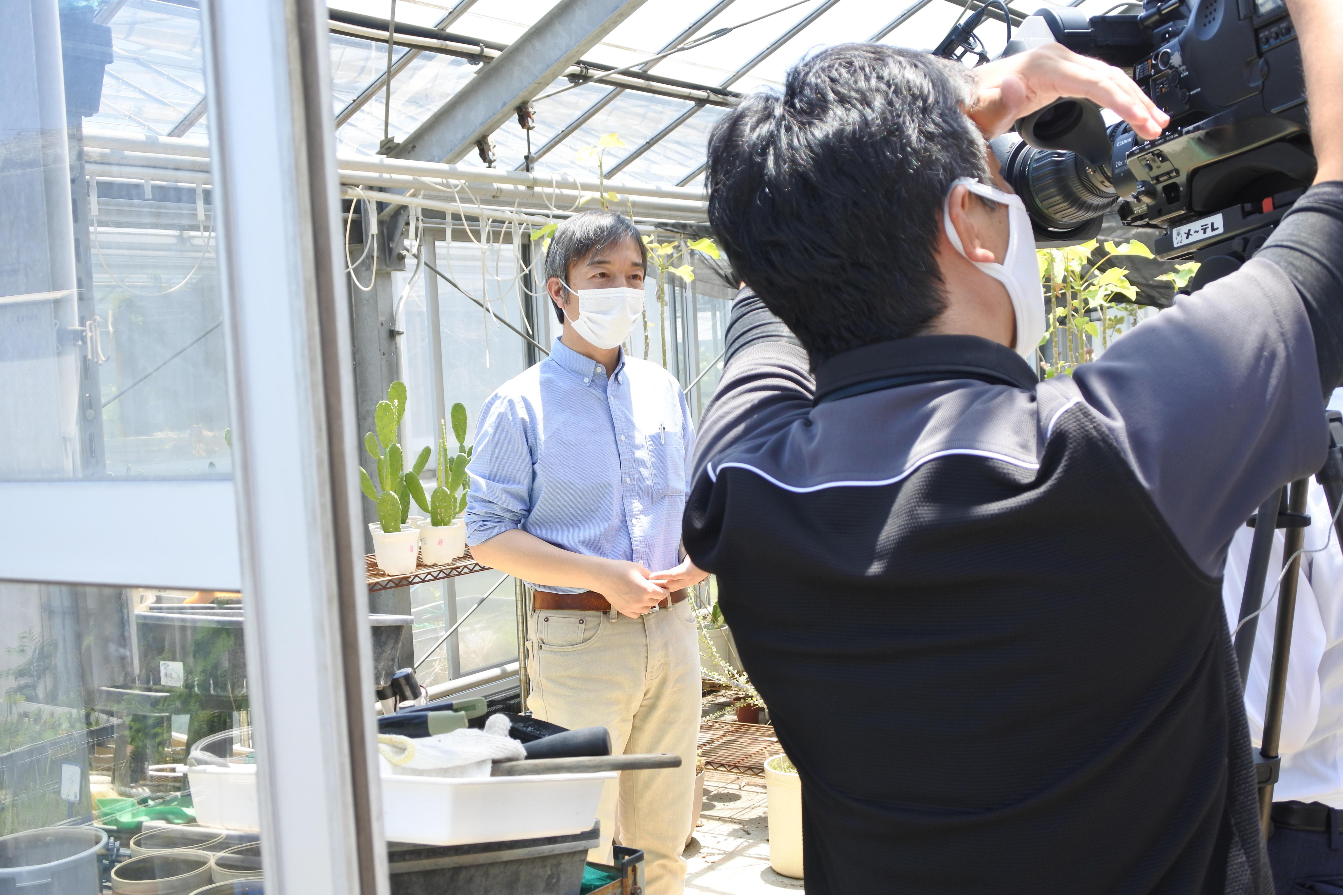 天白キャンパスの温室で名古屋テレビの取材を受ける近藤准教授