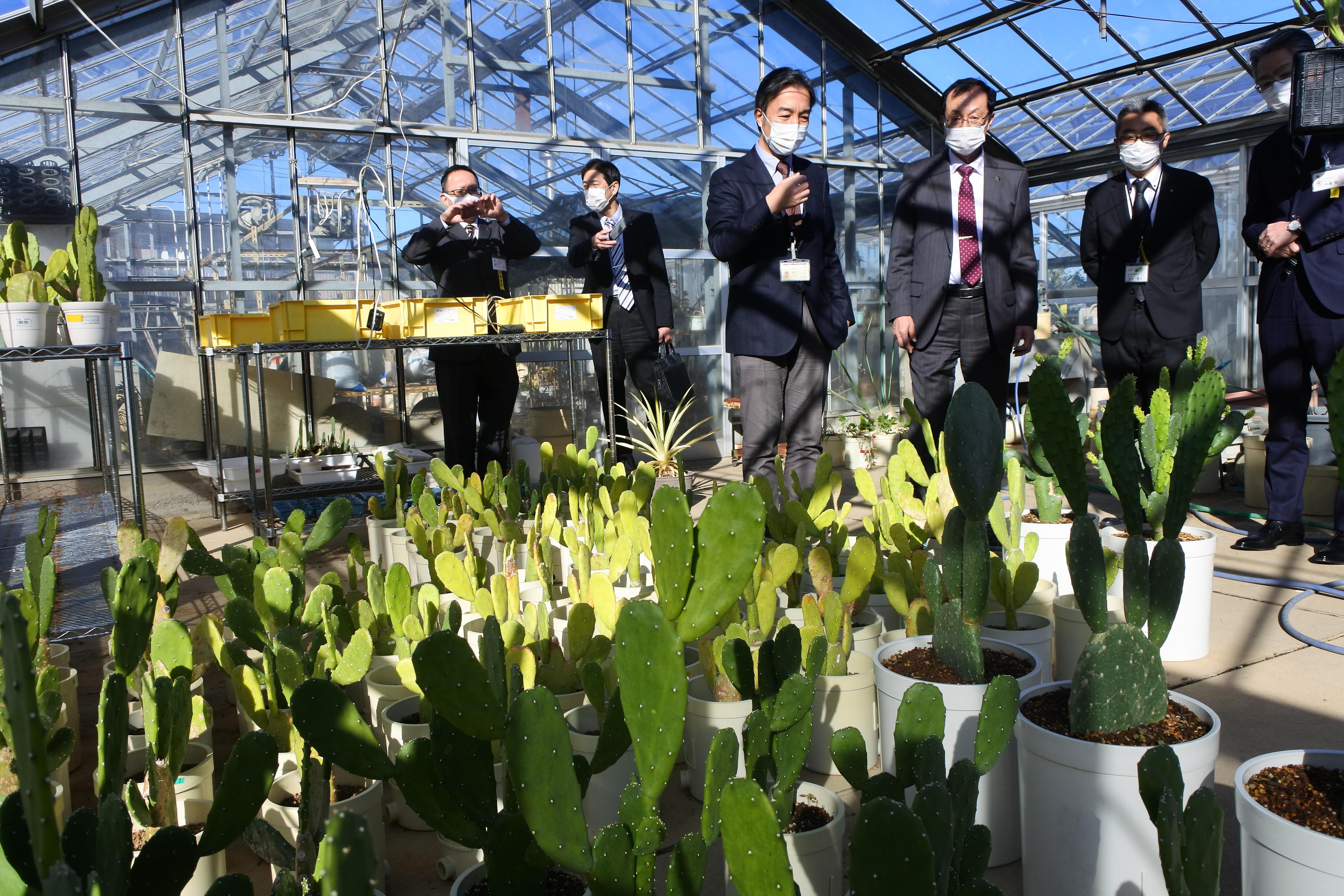 温室のサボテンを見学する伊藤市長