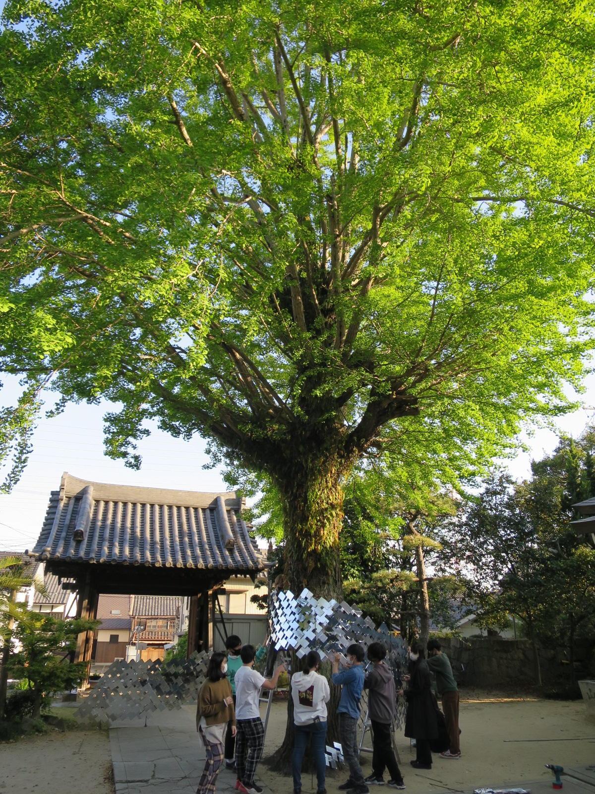 イチョウの大木の下で行われた4月10日の設営